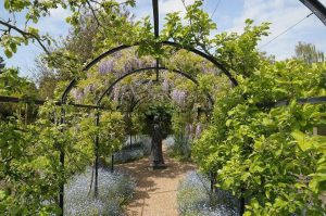 Photo of michelham priory wisteria