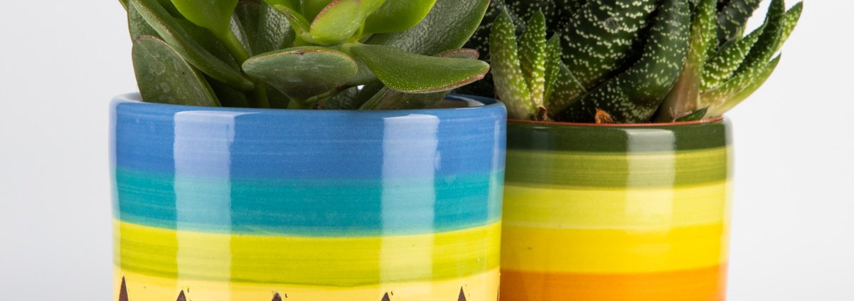 A photo pf two hand made ceramic 70s design plant pots with plants in